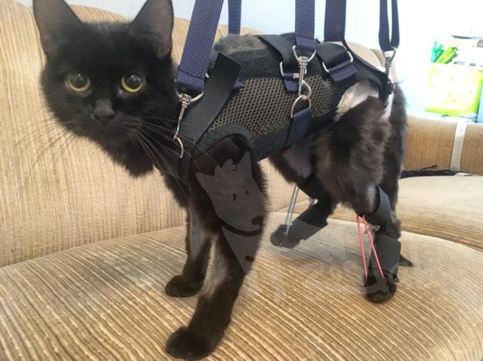 поддержка и бандажи для кошки zoolab