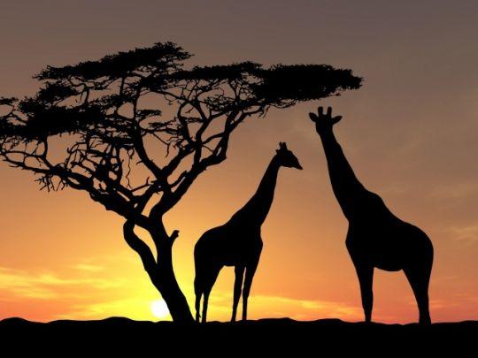 Африка сафари