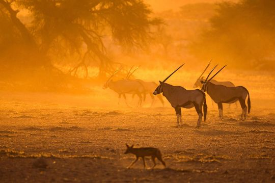 Путешествия по Африке