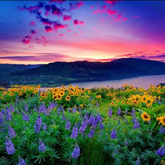 Долина цветов. Индия