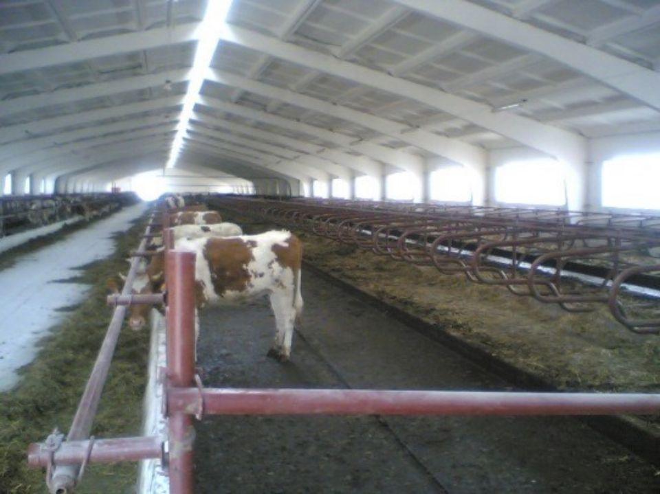 объекты молочной отрасли