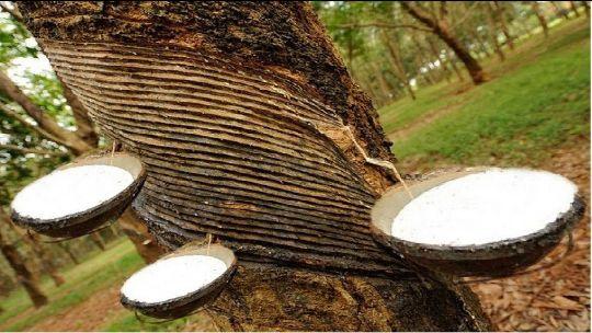 Натуральный каучук для производства релина