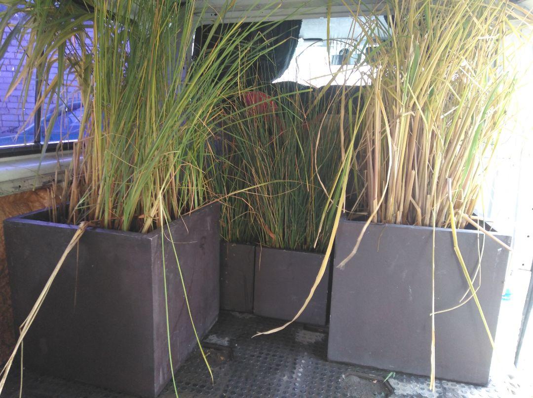 забираем водные растения на зимовку