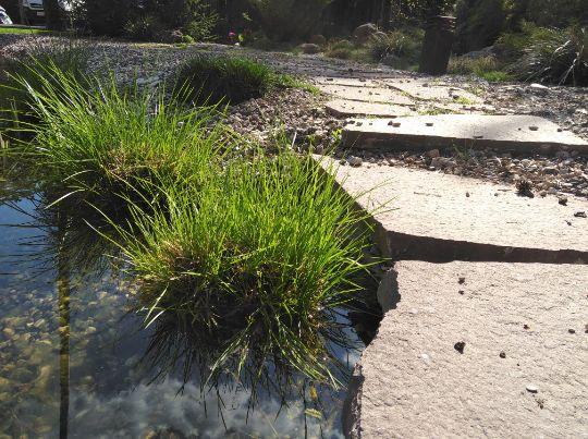 Зона регенерации пруда с высаженными водными растениями