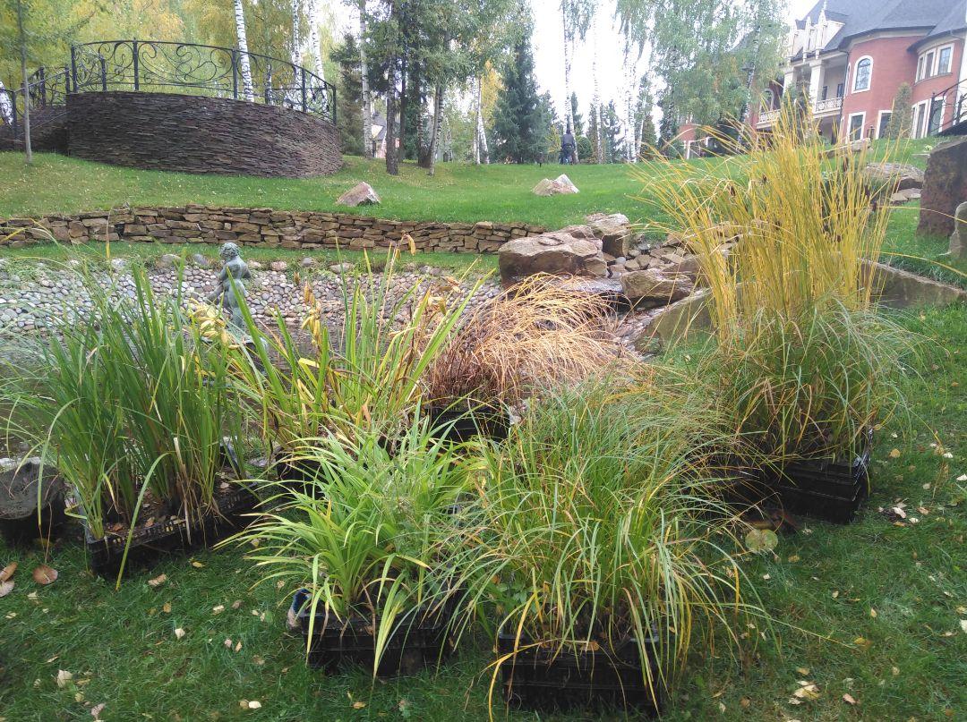 забираем водные растения на зимовку в питомник