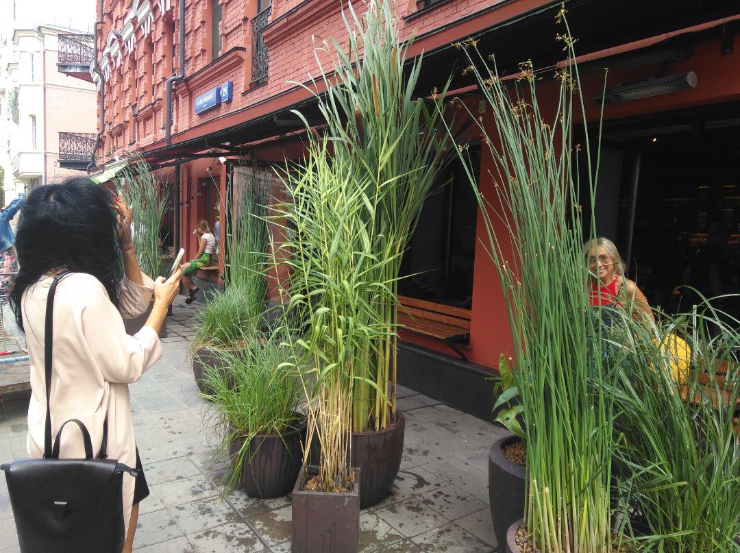 Водные растения в оформлении улицы