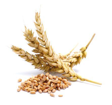 контроль качества пшеницы