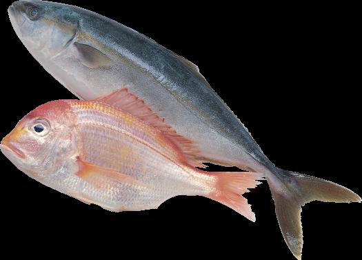 контроль качества рыбы