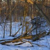 «Фантом «Олень» в зимнем лесу<br>