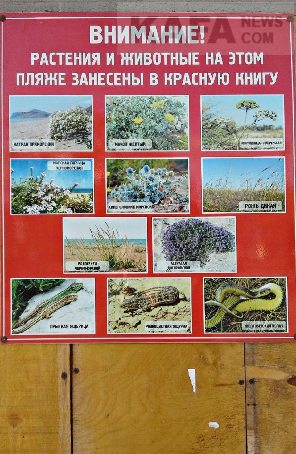 Редкие растения на пляже в Береговом