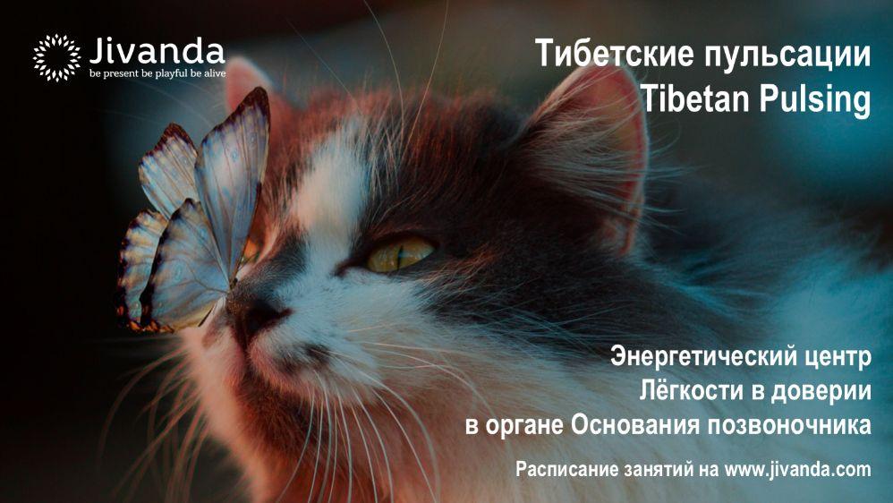 бабочка и кошка
