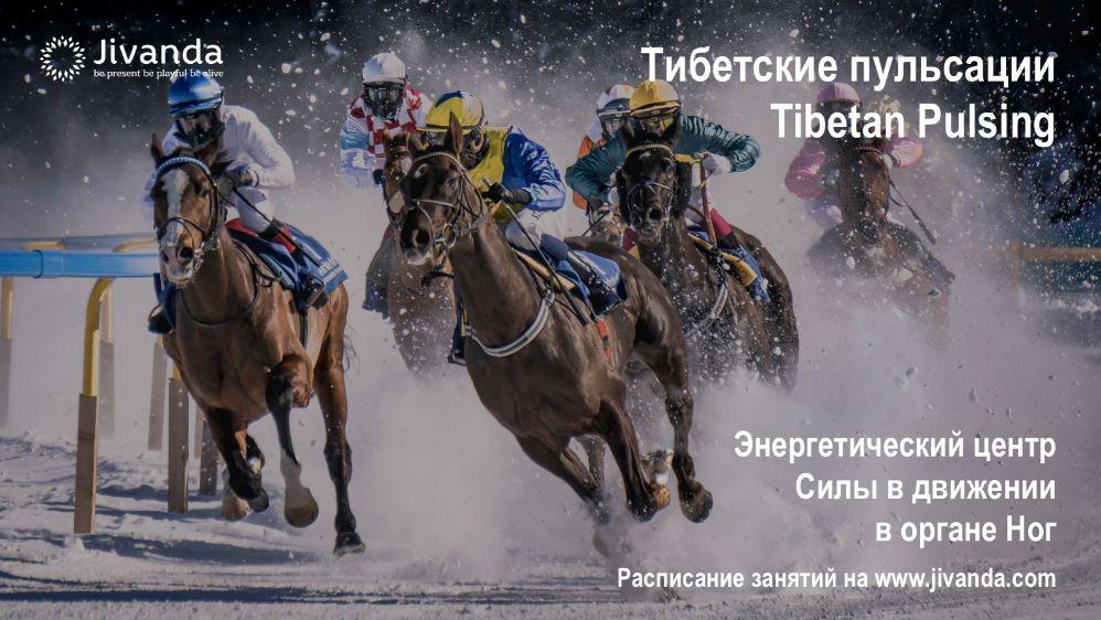 Скачки на лошадях по снегу