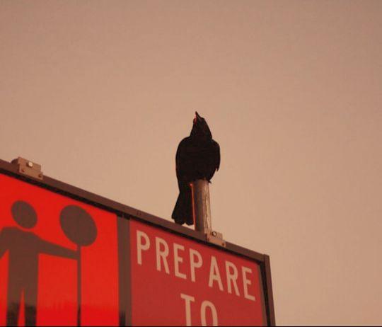 птица на дорожном знаке