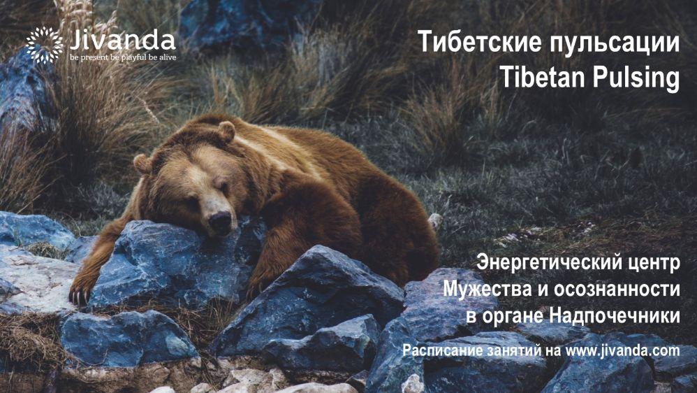 Медведь в природе