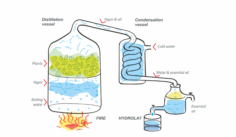 The scheme of obtaining hydrolat. Technology of hydrolat.