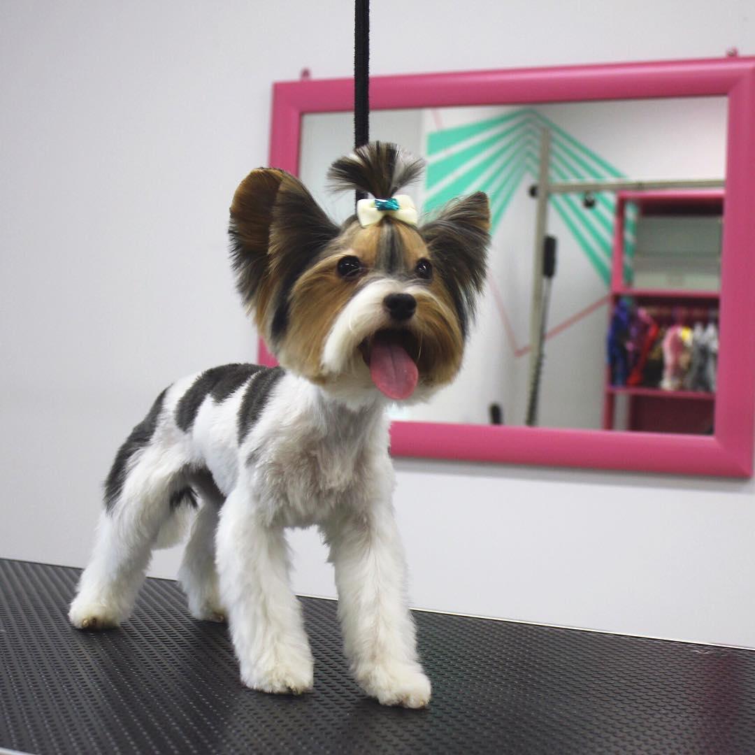 Груминг салон в Ярославле Rock Dog | стрижка собак и кошек