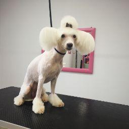 Груминг салон в Ярославле Rock Dog | стрижка собак