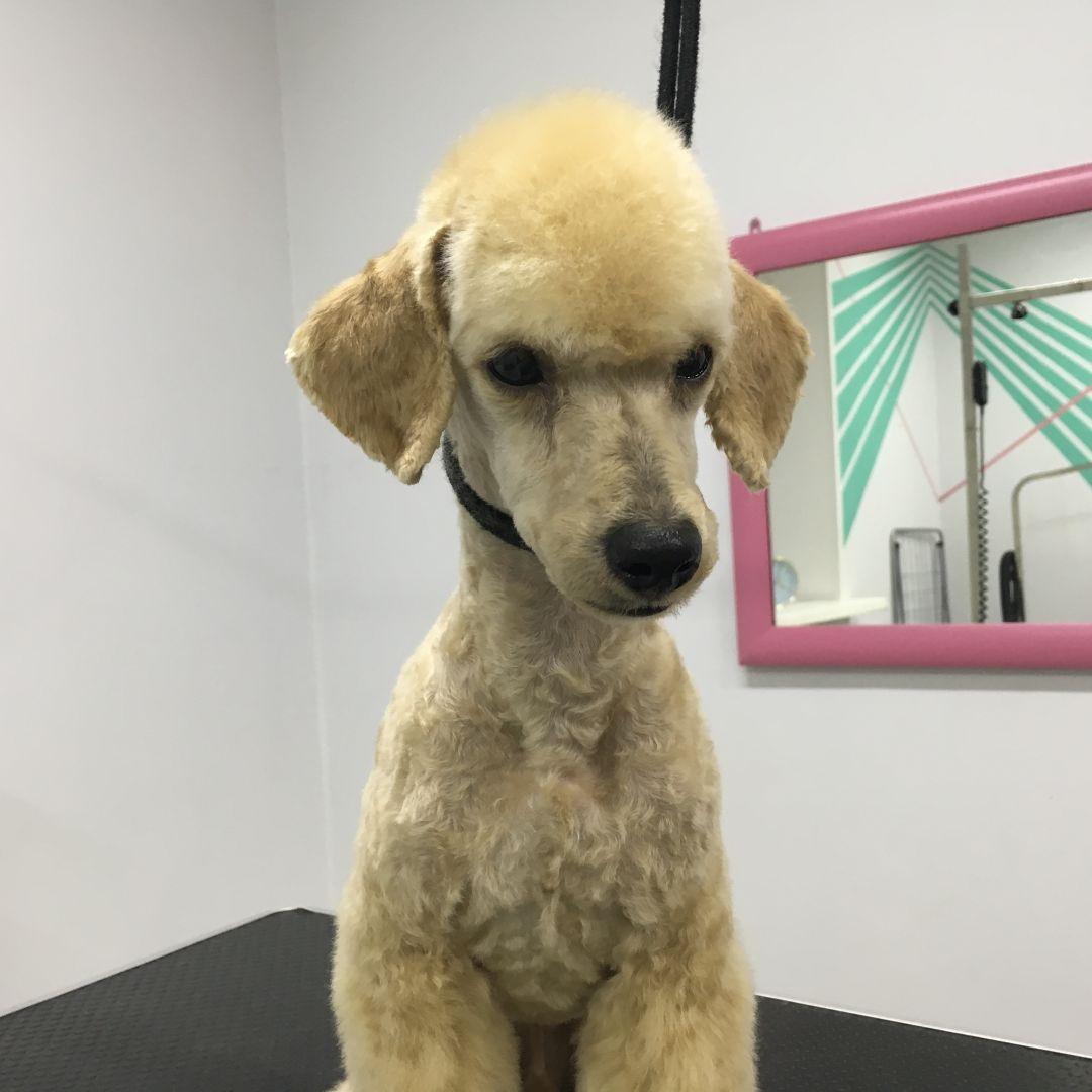 Rock Dog | Груминг салон в Ярославле | Стрижка собак и кошек | Чистка зубов