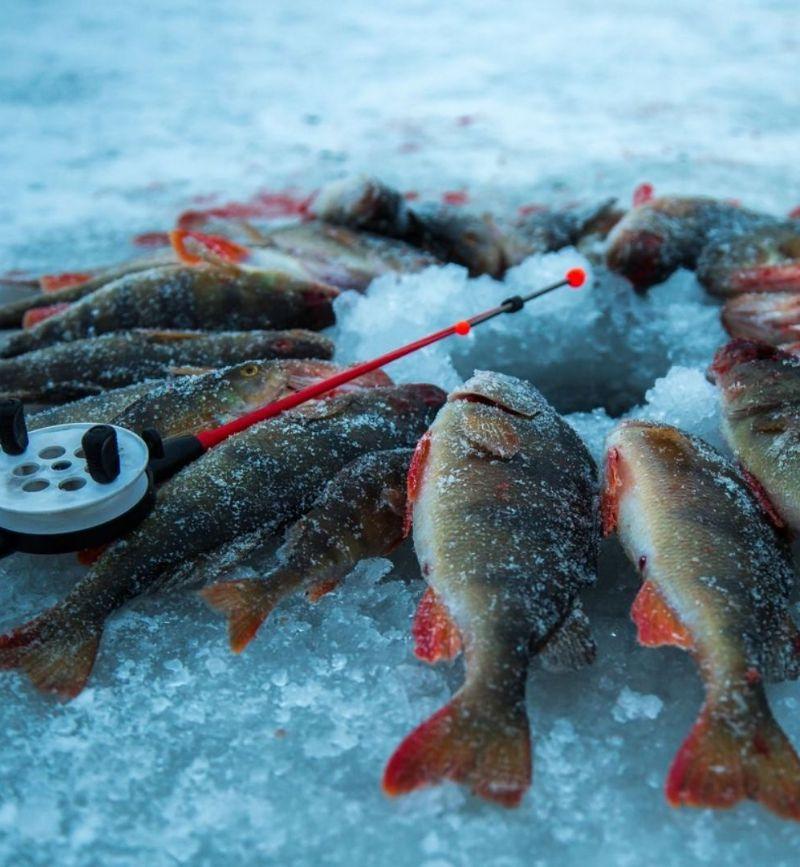 Зимняя рыбалка с эхолотом