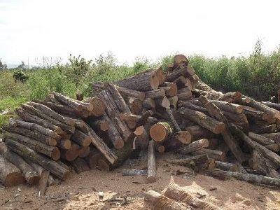 дрова твёрдых пород