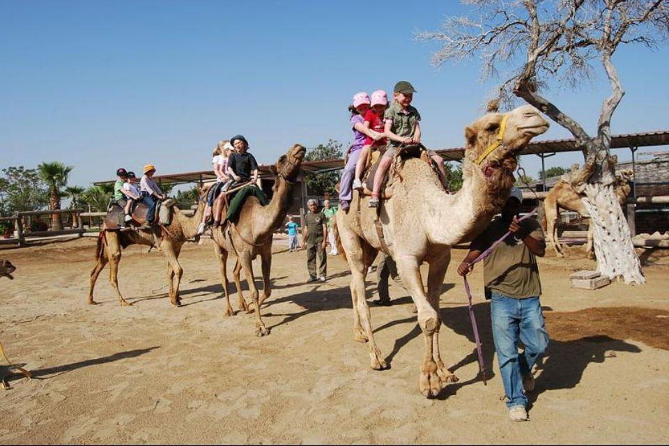 верблюжий парк