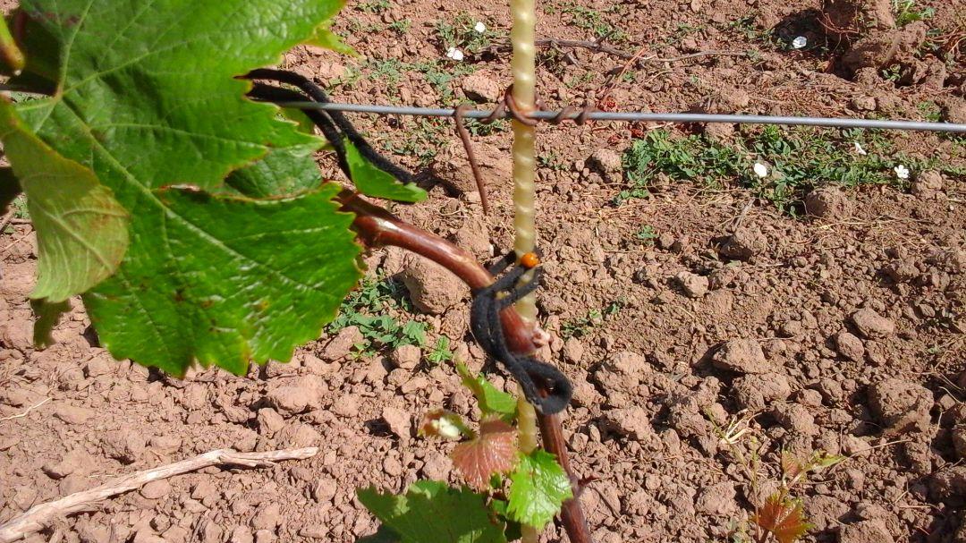 Композитные опоры ПолиПласт для виноградника экологически чисты
