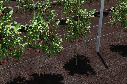 Стеклопластиковые опоры для яблонь