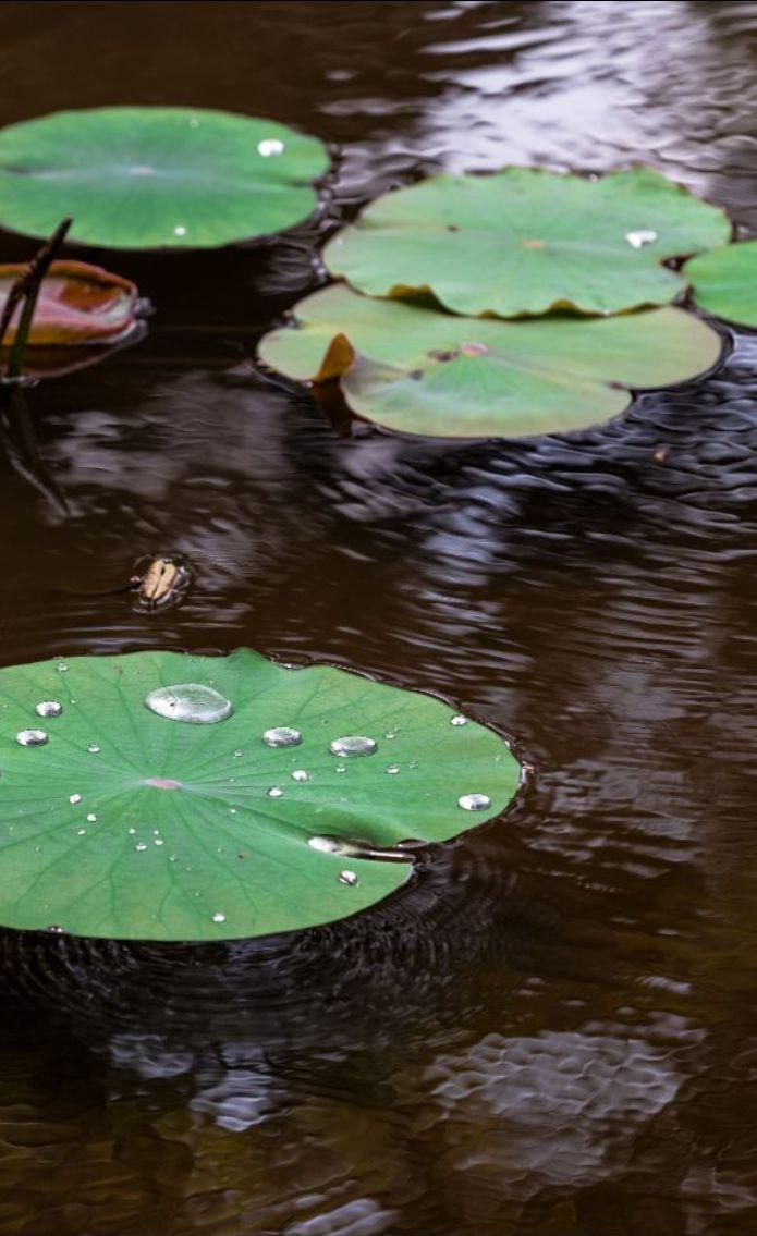 Биофильтр для прудов и УЗВ
