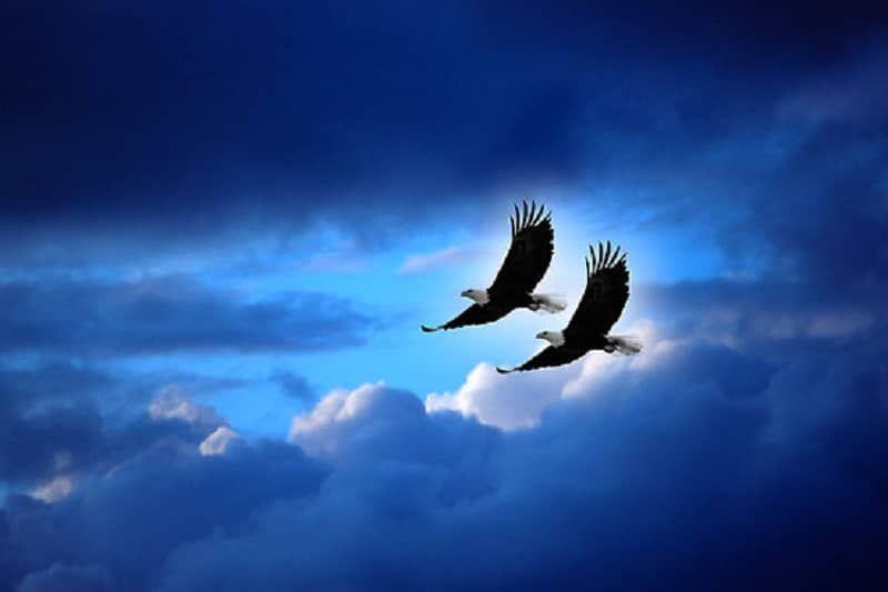 поклонников складывается картинка два орла в небе литосферы